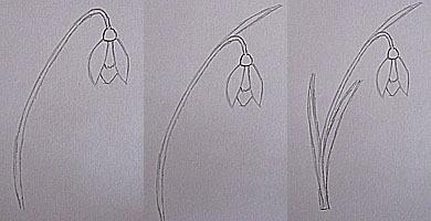 как нарисовать первоцвет 2