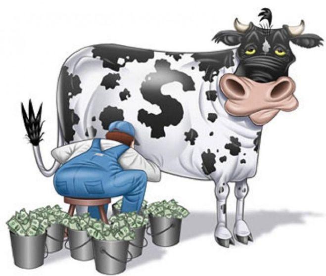 корова, банк, деньги