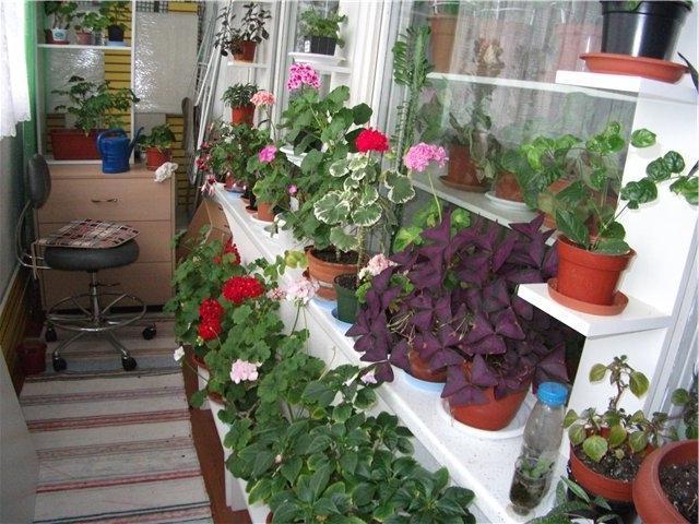 При какой t можно выставлять комнатные цветы на балкон?.
