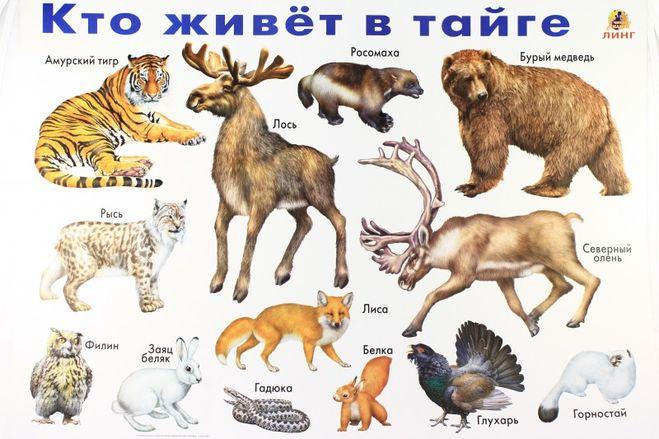 найти обитателей тайги.