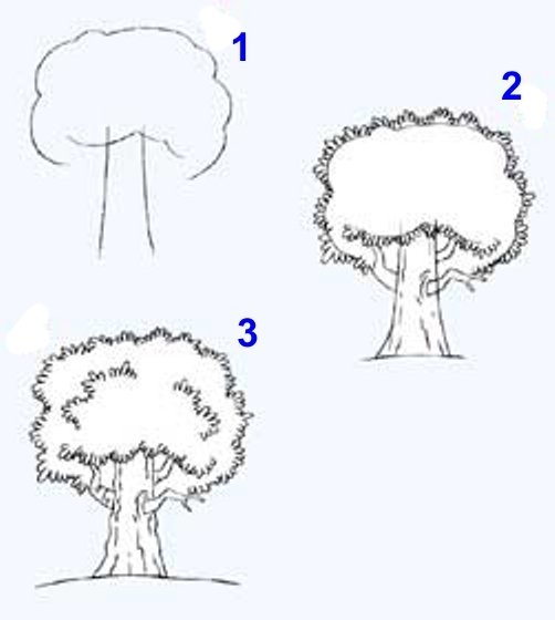 Как нарисовать дерево карандашом поэтапно