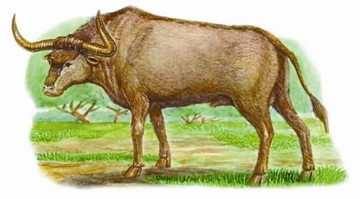 2006 год какого животного по гороскопу был