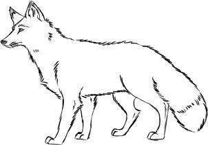Как нарисовать животных леса карандашом поэтапно