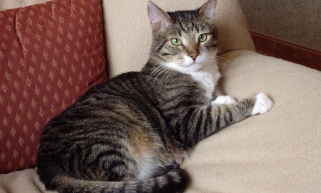 Приметы о полосатых котов
