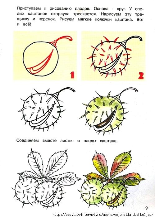 Как рисуют каштан