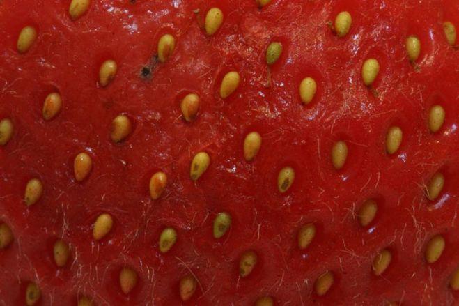 Что такое клубника