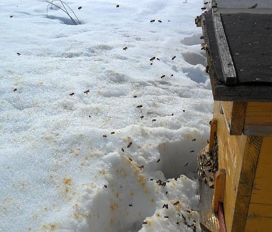 при какой температуре выставляют пчел весной