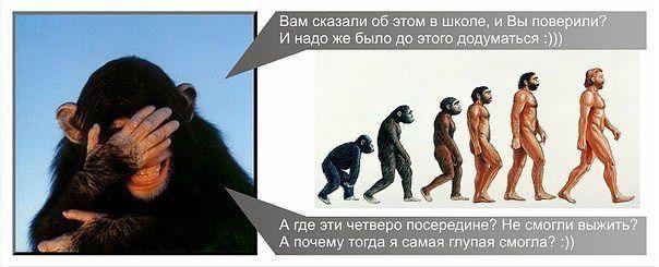 Происхождение человека от обезьяны спорная теория дарвина