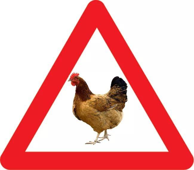 Осторожно курица!