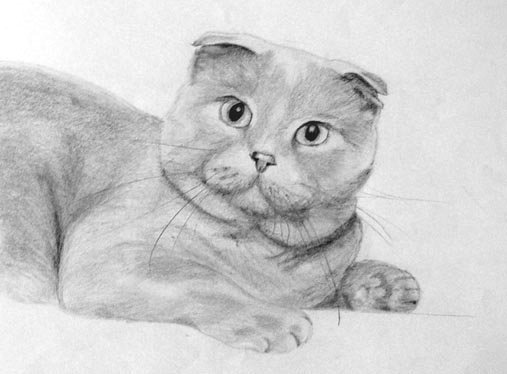 Как рисовать британского кота поэтапно