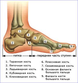 Болит ладьевидная и кубовидная кость, как лечить?