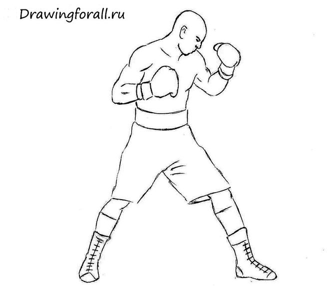 Как нарисовать боксёра поэтапно