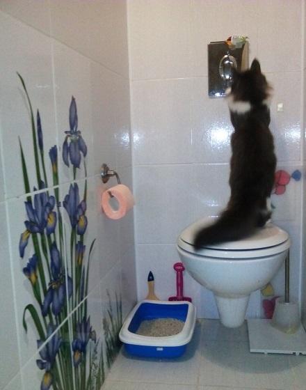 Кот; Кошка; Животные