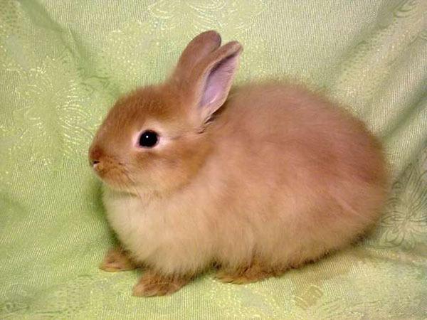 Сколько стоит мясо кролика за 1 кг - a