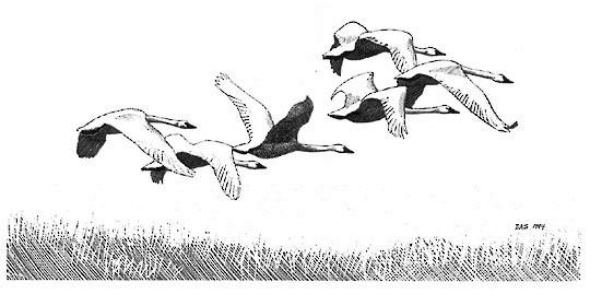 лебеди рисунок своими руками