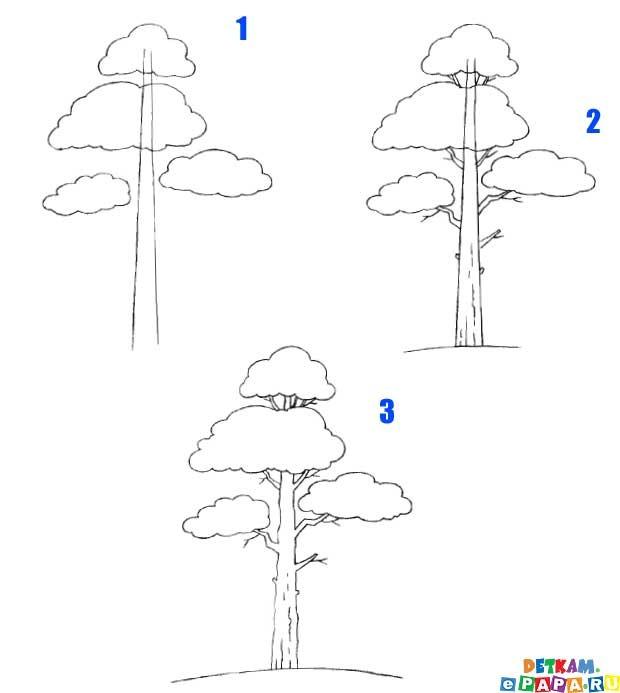 еще и хвойным деревом.