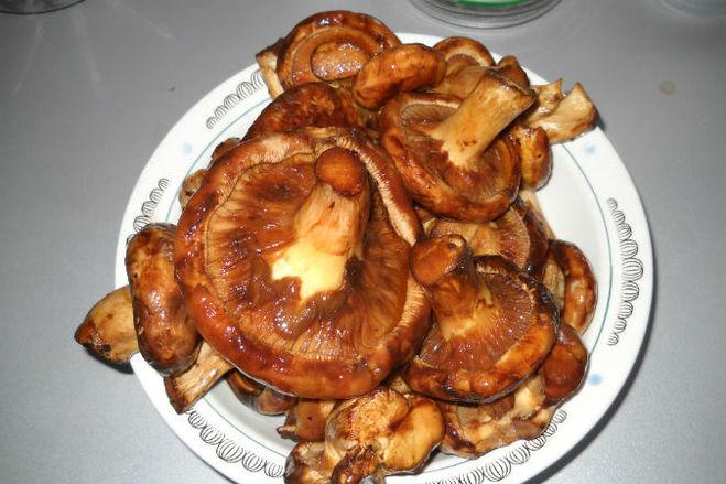 гриб коровник суп рецепт с фото
