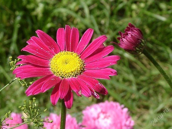 Цветок похожий