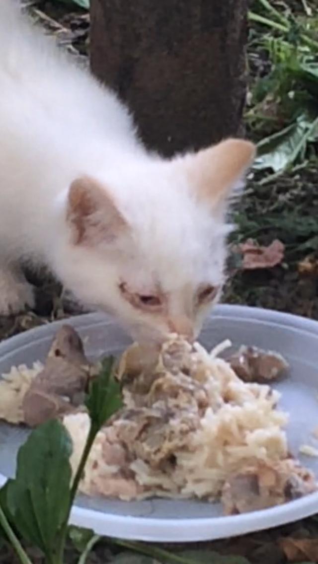 Конъюнктивит котёнка