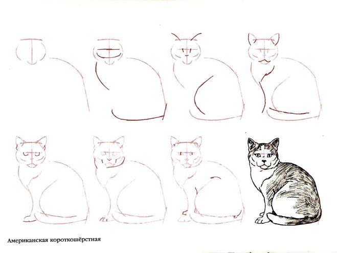 Фото кошки поэтапно