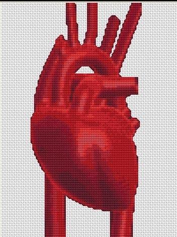 реалистичное анатомическое сердце вышивка крестиком