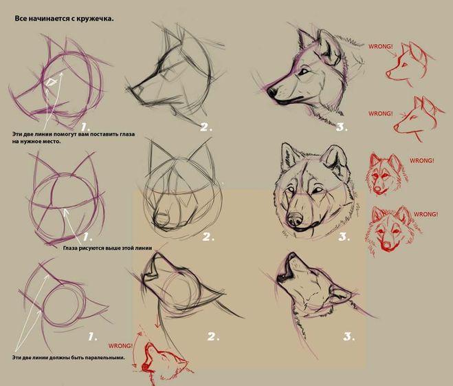 рисования Воющего волка у