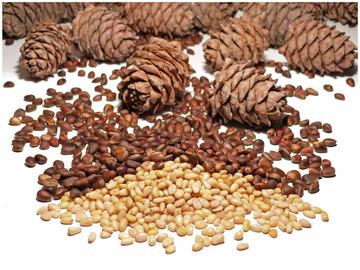 чистка кедровых орехов