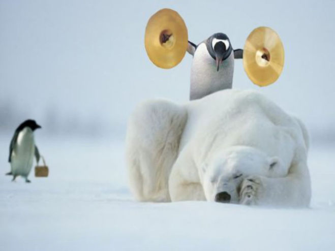 пингвин и медведь