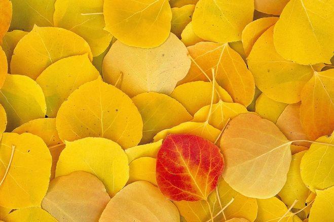 жёлтый цвет оттенки