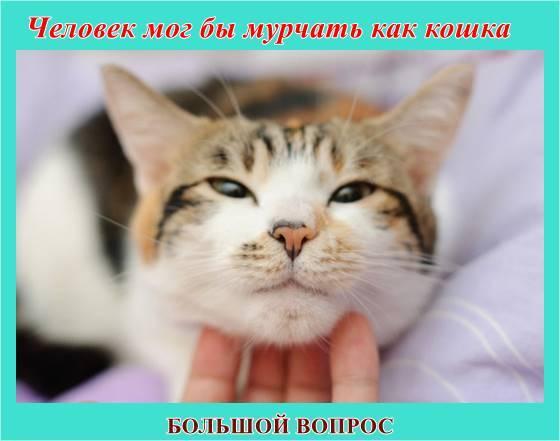 чему можно научиться у кота, скворца, пчелы, проект