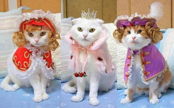 фото кошек в одежде помнить, что элитные