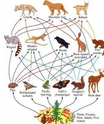 Цепочка Питания Животных В Луговом Сообществе