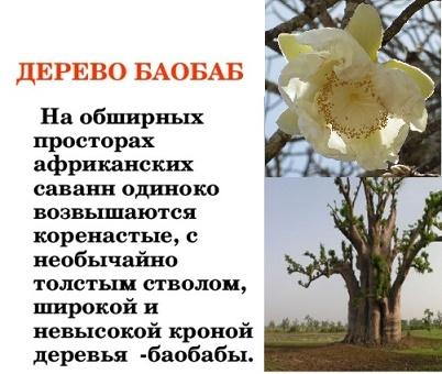 Доклад баобаб
