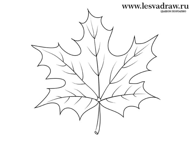 Лист винограда нарисован