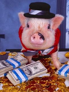 фото свинка с купюрами