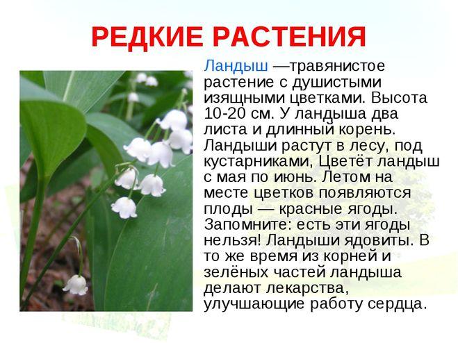 Доклад о растение ландыш 6211