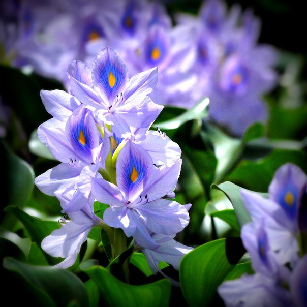 Цвета более естественные