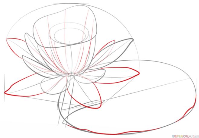 как нарисовать водную лилию 5