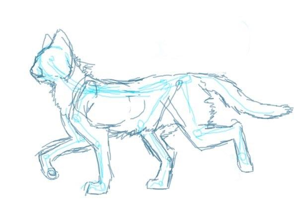 Поэтапно нарисовать кота воителя