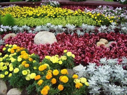 Какие цветы цветут в май июнь