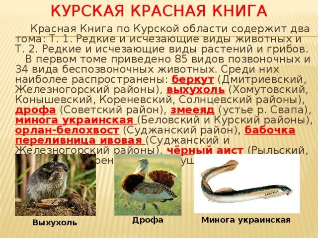 Животные красной книги курской области доклад 5556