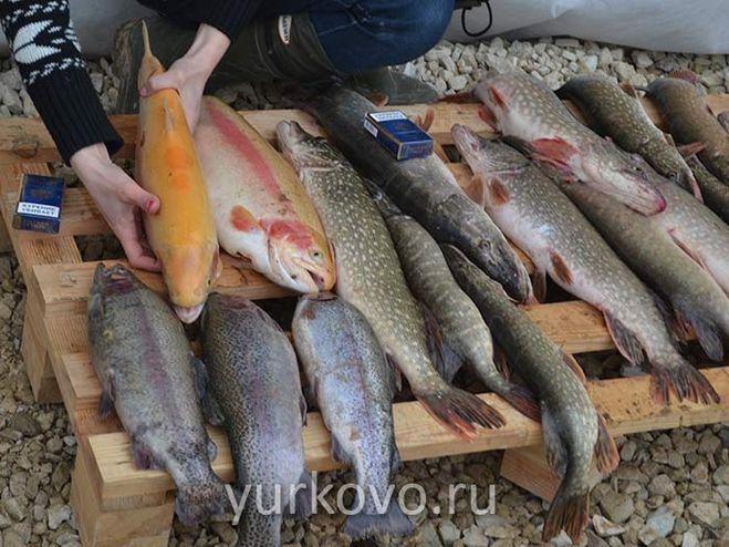 хозяйства для рыбалки