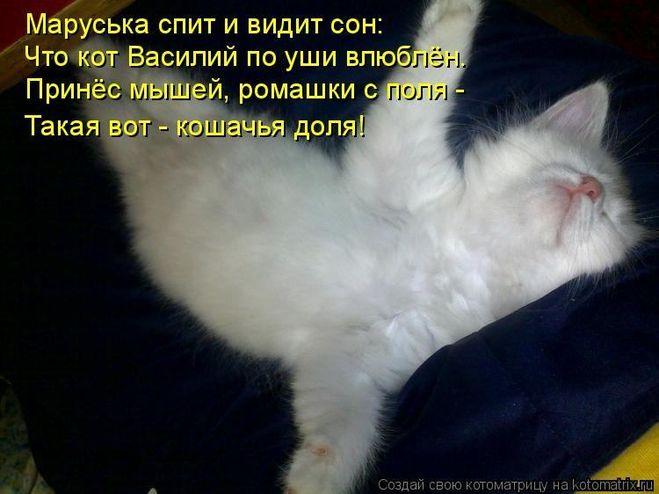 Гладить котенка во сне — будете обмануты в надеждах, если вы этого не делаете, то неприятности обойдут вас стороной.