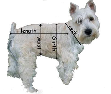 мерки для собаки