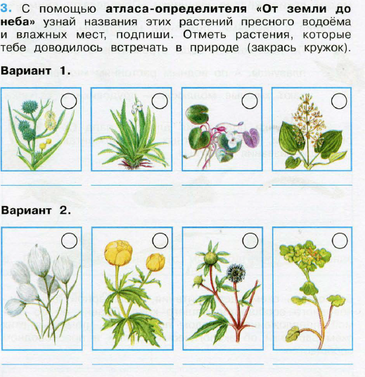 растения пресного водоёма фото и названия
