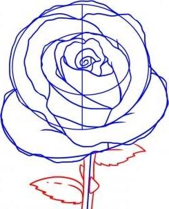 Роза с шипами  картинки и обои для рабочего стола