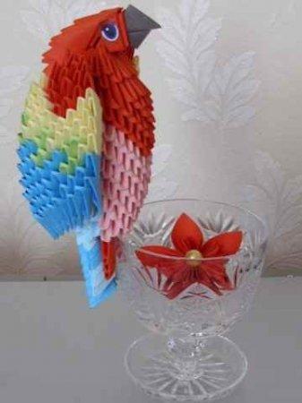 Еще один красивый попугай из