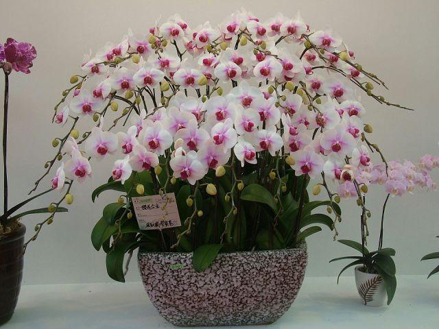 Картинки с орхидеями в природе