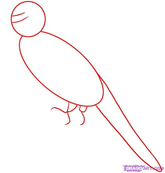 как нарисовать попугая волнистого видео