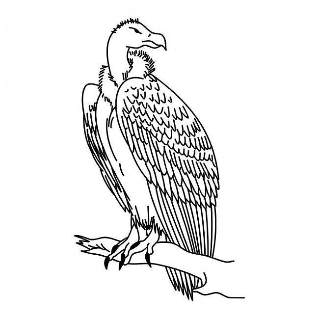 Такую птицу рисовать-одно